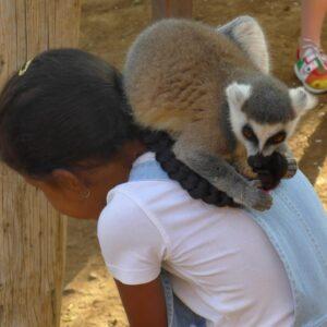 Поездка в Monkey Park