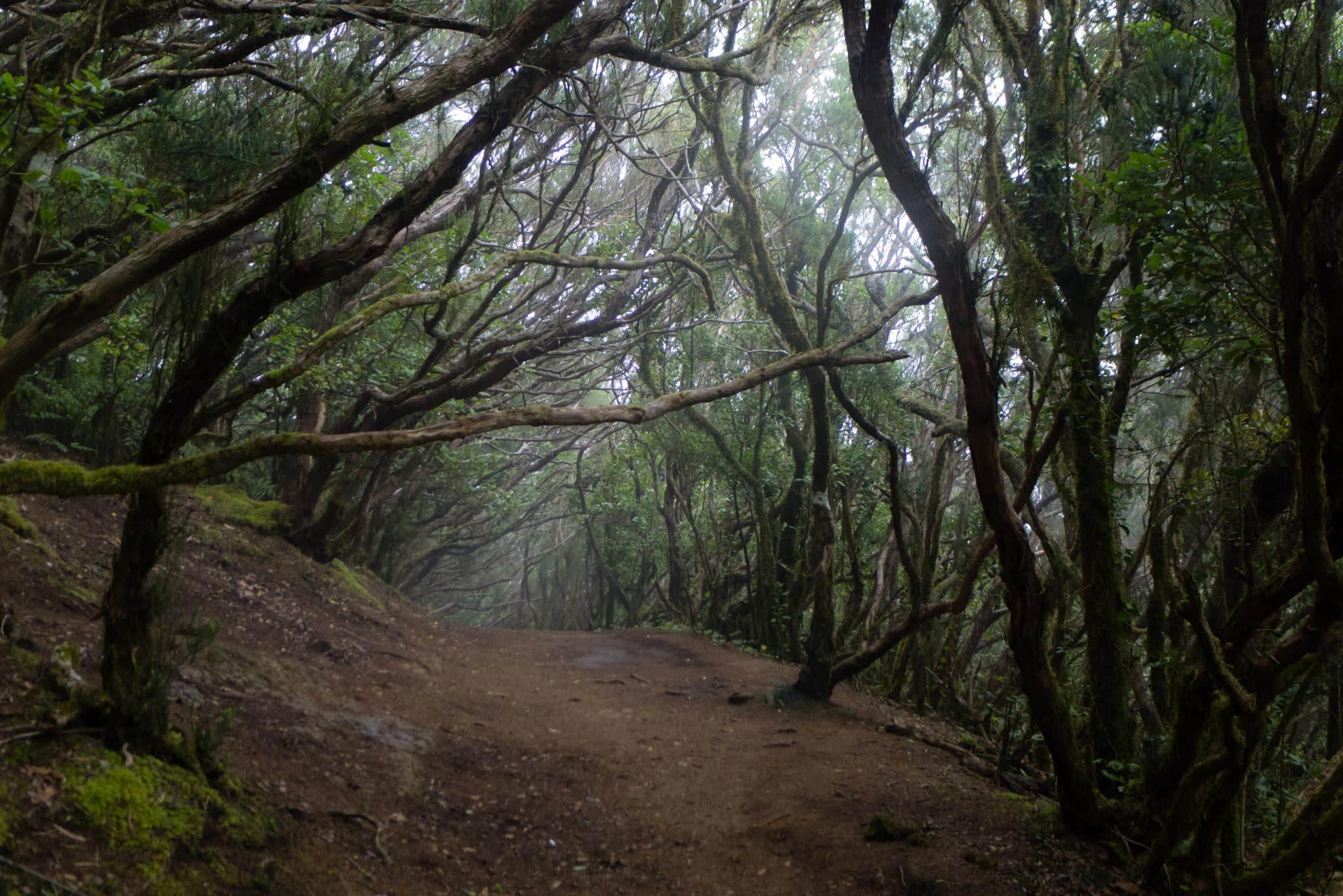 Реликтовые леса Анаги и Таганана