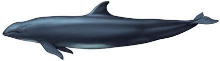 Киты и дельфины на Тенерифе